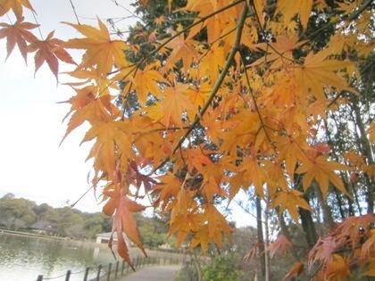 深田池畔の紅葉