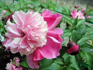 壷阪寺に咲く花