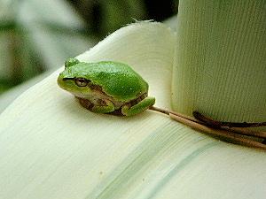 船宿寺の遊歩道 蛙