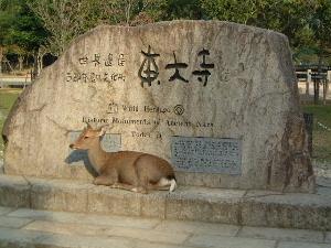 世界遺産の東大寺 奈良公園の鹿