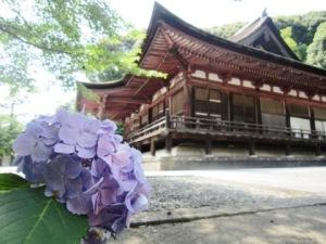 長弓寺本堂と紫陽花