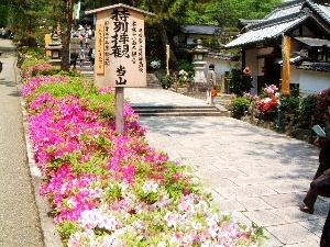 牡丹観賞の長谷寺