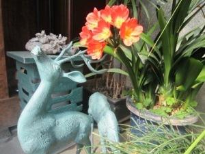 春に花咲くクンシラン