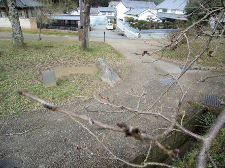 芽吹きとマラ石