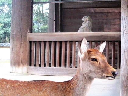 東大寺南大門前の鹿