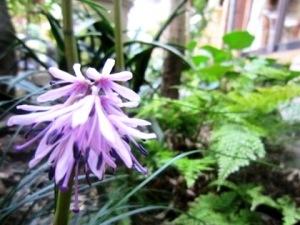 中庭に咲く4月の花