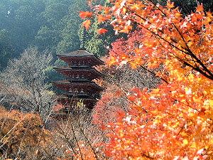 五重塔と紅葉 長谷寺境内