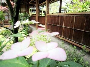 中庭に咲く紫陽花 大神神社の食事