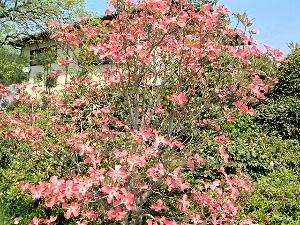 飛鳥に咲く花