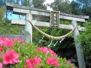 飛鳥坐神社の鳥居 つつじ