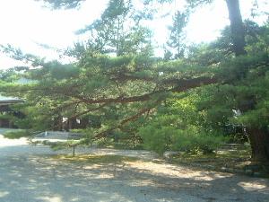 big-tree.JPG