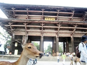 東大寺南大門と奈良公園の鹿