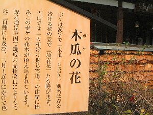 木瓜の花 ガイド 安倍文殊院