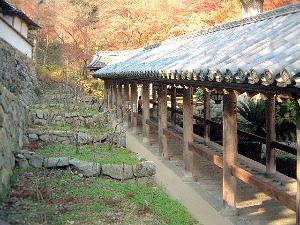 長谷寺のぼたん 登廊