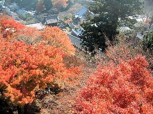 舞台からの眺め 奈良県の長谷寺