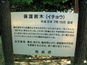 乳銀杏ガイド