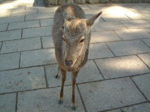 奈良公園の鹿 夏休みの旅館予約