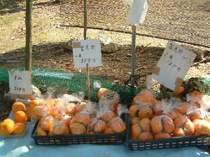 長岳寺参道の富有柿