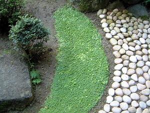 中庭 日本庭園