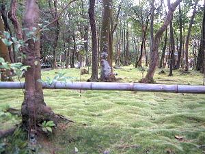 秋篠寺の苔