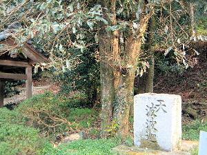 波々架の木 天香山神社