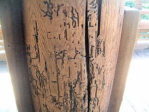 柱の穴 東大寺二月堂の舞台