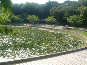 kashihara-pond.JPG