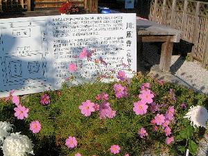 川原寺跡のガイド