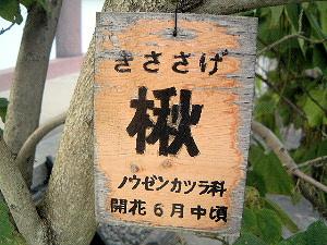 キササゲ 興福寺国宝館