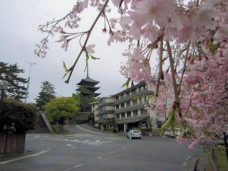 猿沢池畔の桜