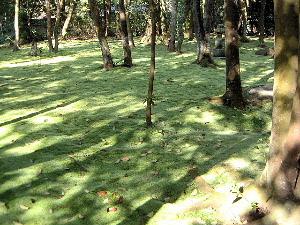 秋篠寺の苔庭