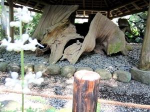 衣掛杉 大神神社