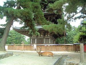 休憩中の奈良公園の鹿