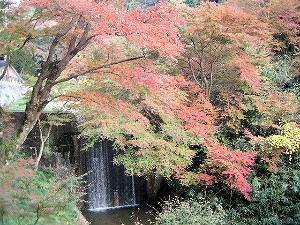 正暦寺参道の紅葉風景