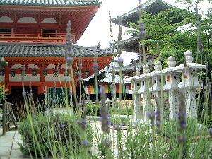 ラベンダーと三重塔 壷阪寺