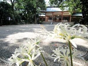 売太神社のヒガンバナ