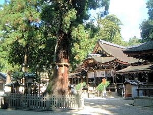 巳の神杉と拝殿