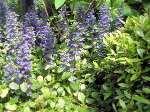 青い花 大正楼中庭