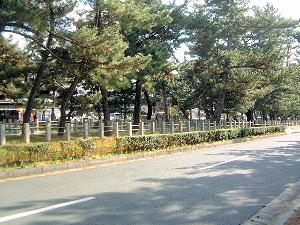 法隆寺前の松並木