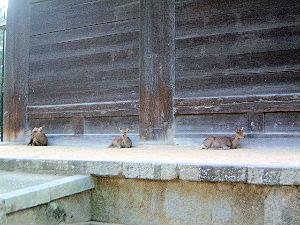 nandaimon-deer.jpg