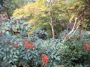 南天と紅葉の風景