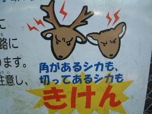 奈良公園の鹿に注意