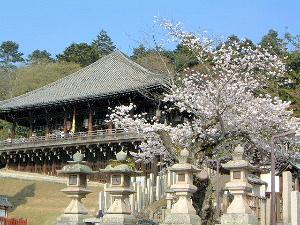 東大寺二月堂 桜
