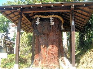 おだまき杉 若宮神社