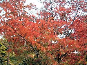 境内の紅葉 談山神社