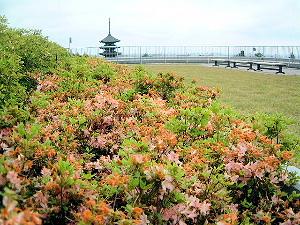 奈良県庁の屋上緑化 興福寺五重塔とツツジ