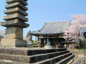 般若寺本堂 十三重石塔 桜