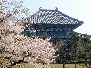 東大寺大仏殿 桜