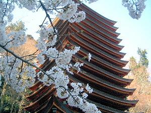 談山神社の桜 十三重塔