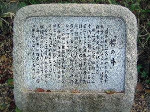 桜の井ガイド